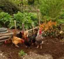 Voordelige tuindiere: watter diere is goed vir tuine