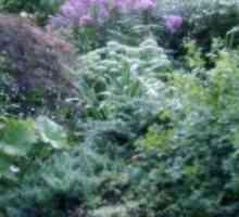Redes om inheemse plante in jou tuin of op skool te plant