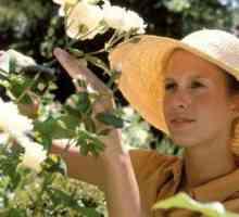 Feite op wit roosblomme