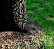 Grasaad vir skaduwee: watter gras groei in skaduwee