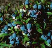 Berry bosse wat kleure verander
