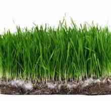 Hoe lank neem dit grasse om gras te produseer?