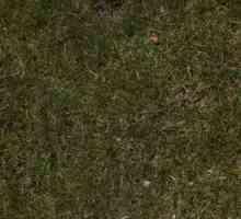 Hoe om koel seisoen gras van bermuda grasperke te verwyder
