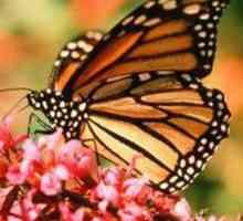 Wat is die voordele van vlindertuine vir die omgewing?