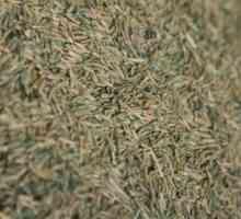 Hoe om gras saad te bereken vir oormaat